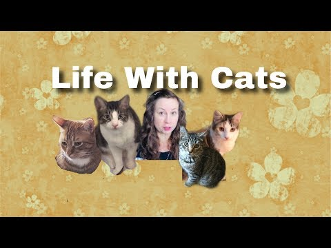 2019 Live Cat Chat | The High Cost Of Vet Care