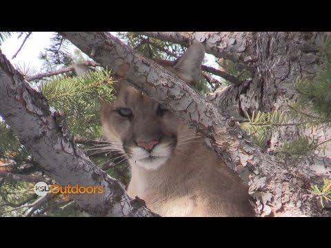 Hunting Huns and Mountain Lions