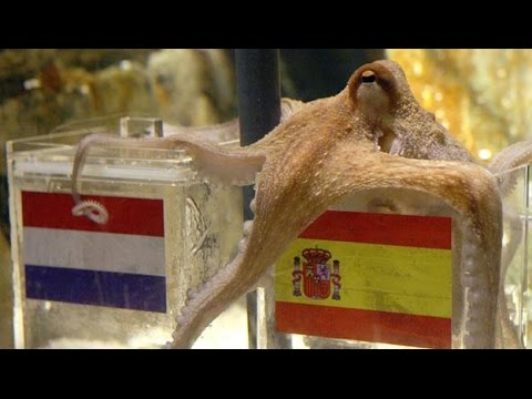 Prediccion Pulpo Paul (Holanda - España) Final del Mundial 2010