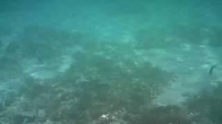 Underwater film, Son Xoriguer, Menorca