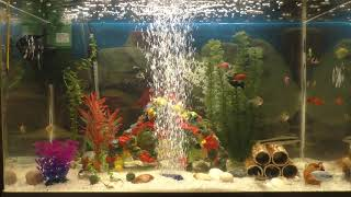 Relax Video aquarian small fishes FullHD