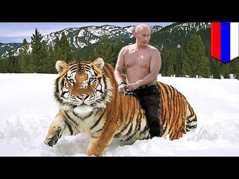 Harimau Presiden Putin menyebrang ke Cina dan memakan kambing - TomoNews