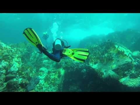 Friday dives in St. Thomas, Calf Rock and Little St. James Ledges