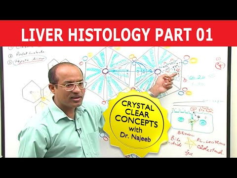 Hepatocytes - Liver Histology - Part 1/7