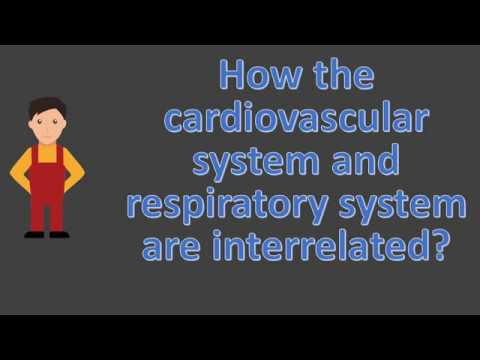 How The Cardiovascular System And Respiratory System Are Interrelated ?  | Health FAQS For Better Li