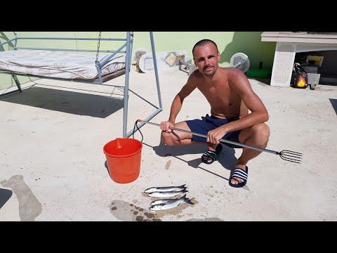Хороший улов. Рыба поймана. Хорватия. Команков.