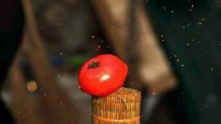 TAMESHIGIRI~Tomato~