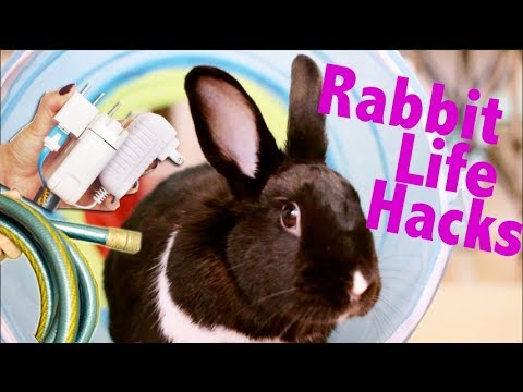 Rabbit Life Hacks