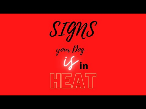 Signs Your Dog Is In Heat | Miggy San's Huskies