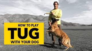 How to Play Tug with Your Dog   Teach Your Dog Proper Tug of War  Robert Cabral Dog Training