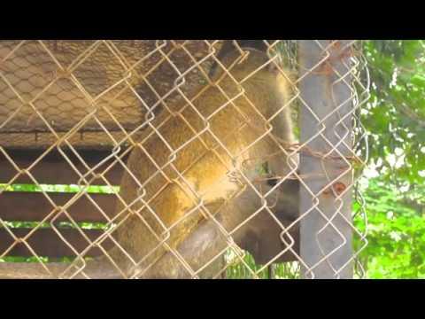 Abuja Zoo, animals, Nigeria, lagos, calabar