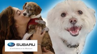 Rescue Dogs Go To The Water Park // Presented By BuzzFeed & Subaru