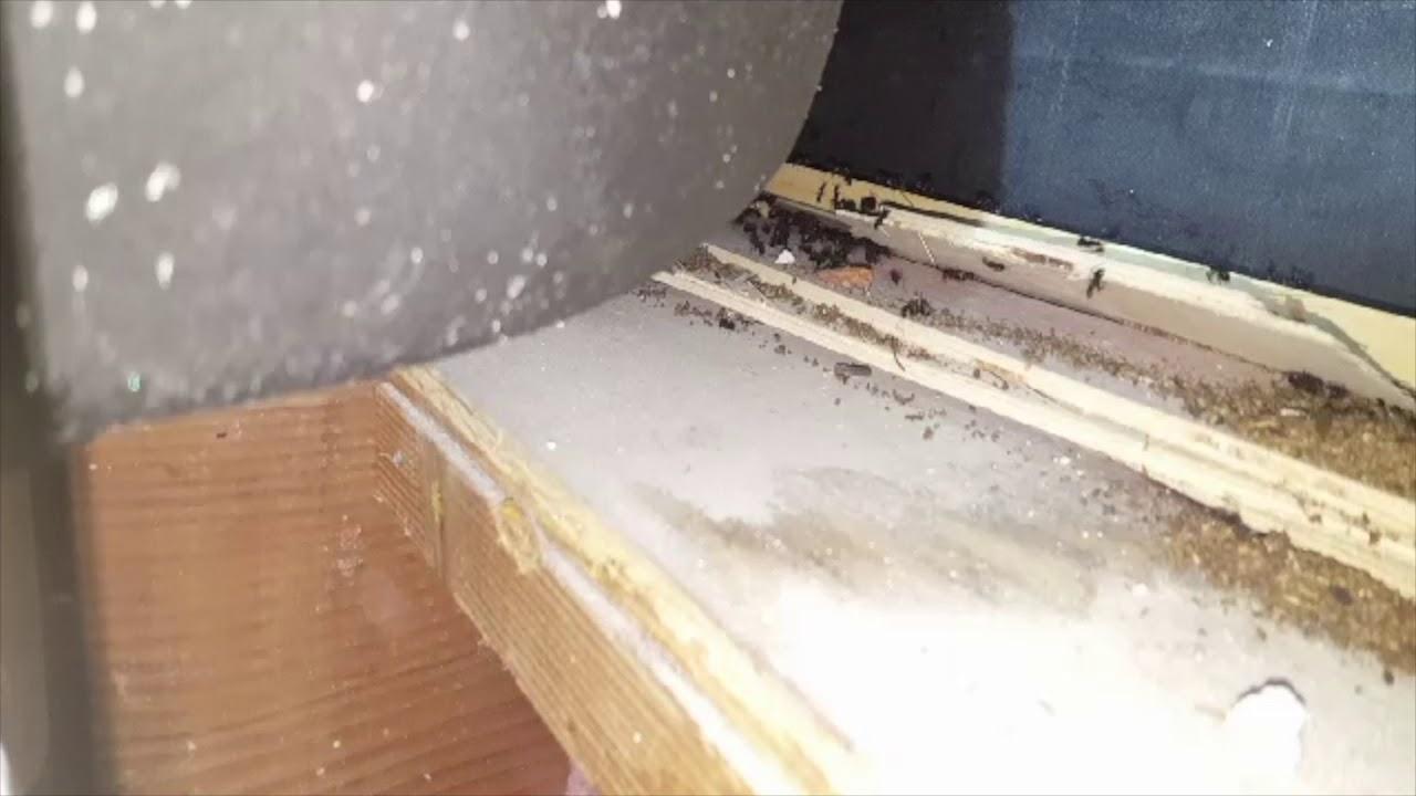carpenter ants nest underneath