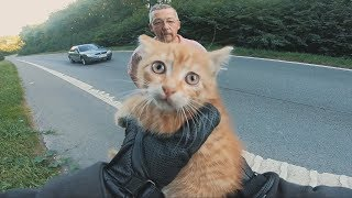 Biker saves a kitten stranded in the middle of the highway