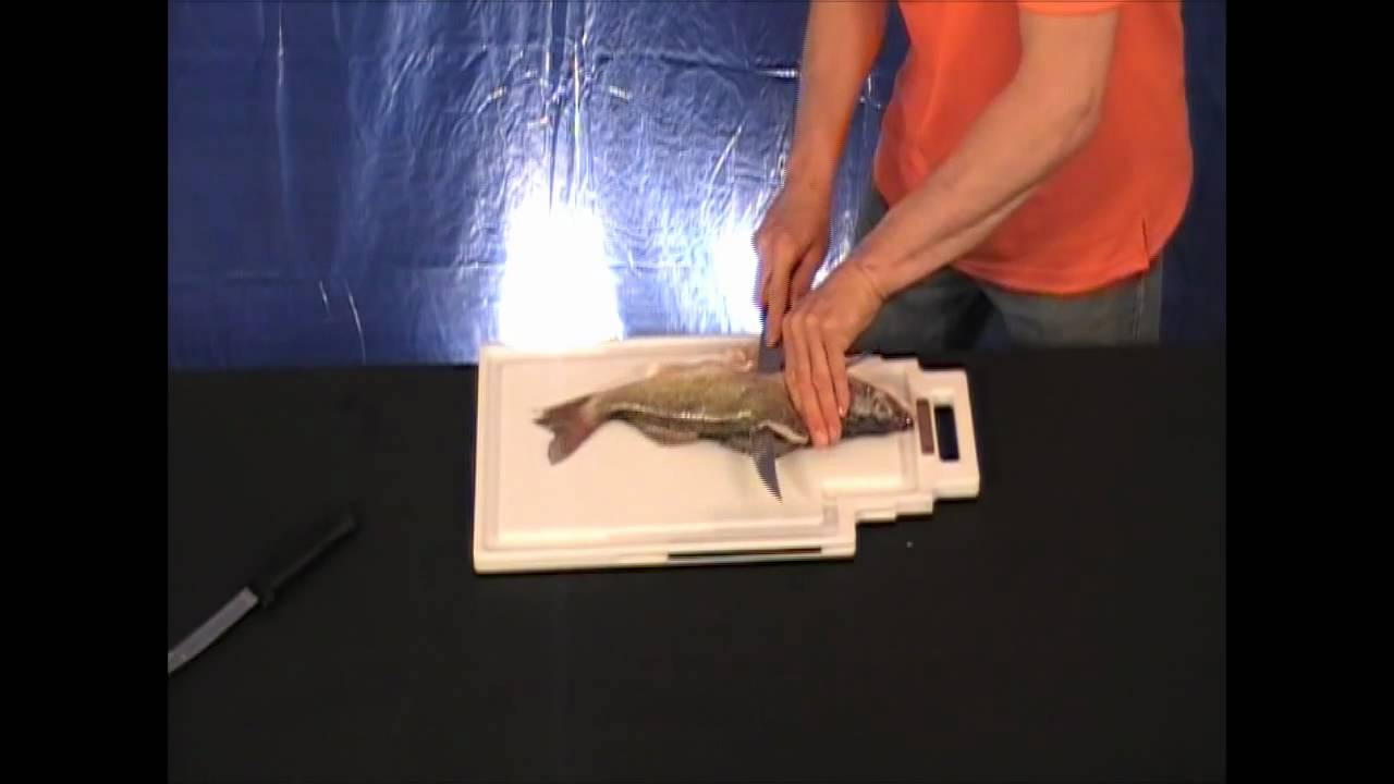 Filleting fish with your quick fillet board pro angler for Fish fillet board