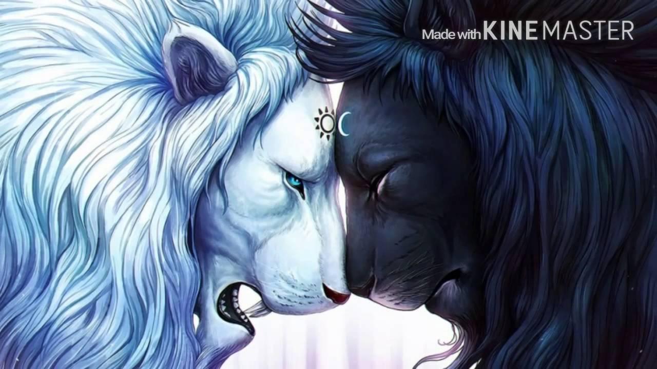 Coole Wolfsbilder