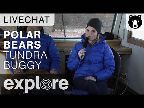 Polar Bears Tundra Buggy - Cape Churchill Canada - Live Chat