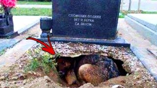 Everyone Thought THIS Dog Was Guarding Her Humans Gravesite. Then The Unthinkable Happens