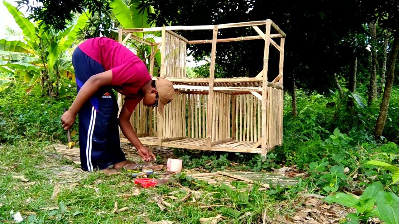 Ukuran Kandang Ayam Bangkok Dari Bambu / cara ternak ayam ...
