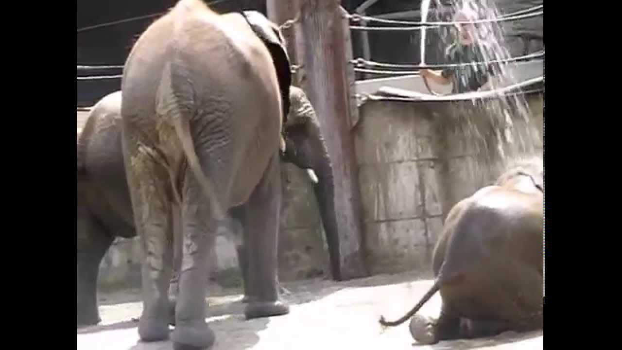 Baby giraffe Julius dies at Maryland Zoo, officials say