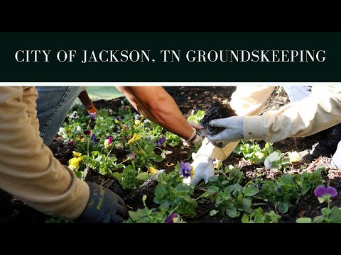 City Of Jackson, TN Landscaping Crew Preps Garden For Lane College Homecoming Parade