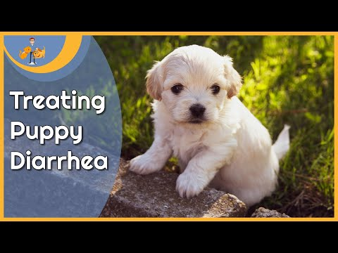 Treating Puppy Diarrhea At Home (and When To Worry)