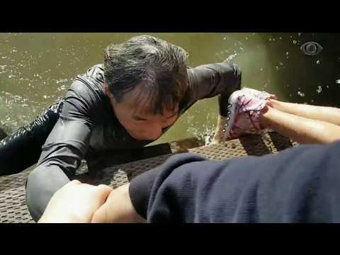Turista flagra leão marinho atacando criança no Canadá