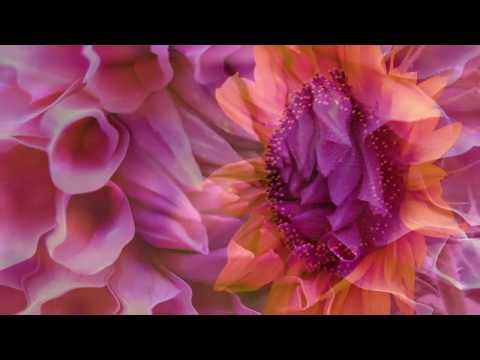 Gymnopédie Nº 1 - Erik Satie ( Finghin Collins)
