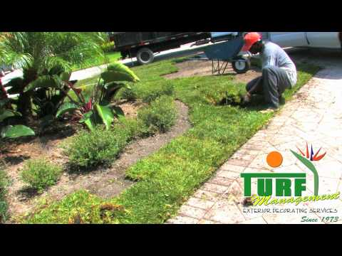 Miami Landscape Design | Turf Management | Design Build
