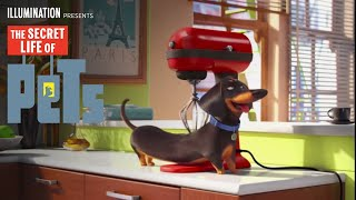 The Secret Life of Pets - Meet Buddy (HD) - Illumination