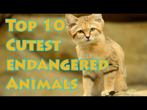 Top 10 Cutest Endangered Animals