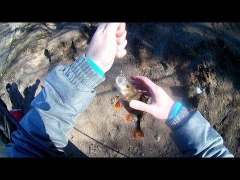 Супер рыбалка в Сестрорецке. Окунь на боковой кивок