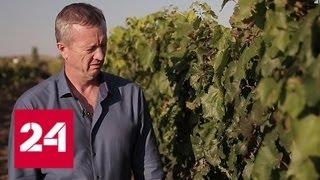 Смотреть видео Истина в вине. Специальный репортаж Юлии Макаровой - Россия 24 онлайн