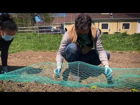Setting Up Bird Netting