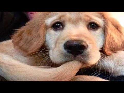 Bom Dia Susseste Haustiere Niedliche Tiere Tiere