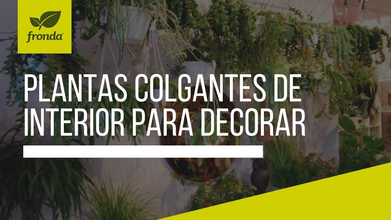 Plantas Colgantes De Interior Para Decorar Tu Hogar U Oficinas - Plantas-colgantes-de-interior