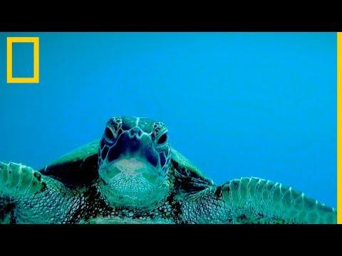 THE BEST AND THE WORST OF HAWAII   enriquealexиз YouTube · Длительность: 10 мин8 с