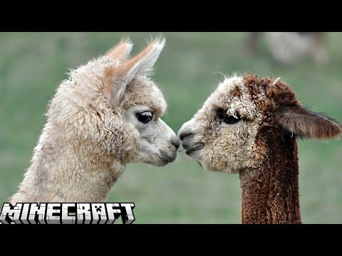 Minecraft: AS ALPACAS VÃO DOMINAR O MUNDO – SKY WARS