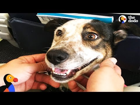 Dog Abandoned On The Street Lives Like A Queen Now | The Dodo