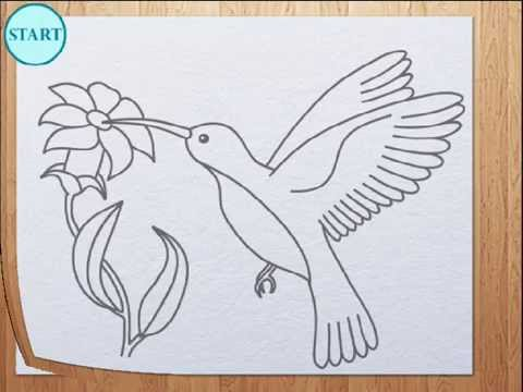 How to draw humming bird colibri