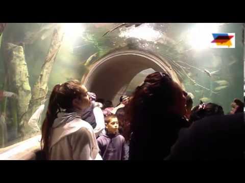 lager en acuario
