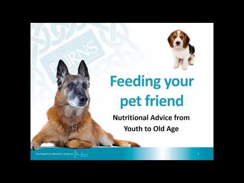 Feeding Your Pet Friend –Nutritional Advice From Youth To Old Age