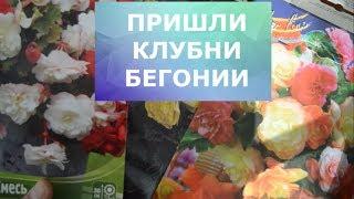 """Клубни ампельной бегонии из интернет магазина """"Для вас"""""""
