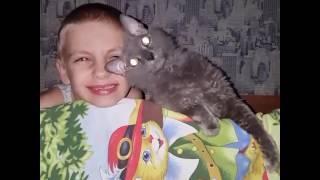 И кошки тоже любят на ночь сказки