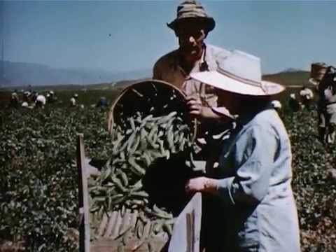 Fresh Food For Your Health - 1956 - CharlieDeanArchives / Archival Footage