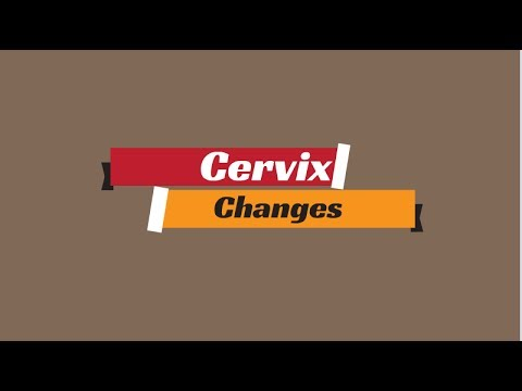 Cervix Changes During Ovulation   Cervix Position   3 Steps to Checking Your Cervix