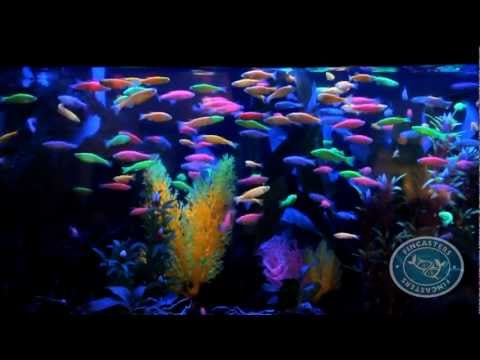 Fincasters Episode 8 GloFish