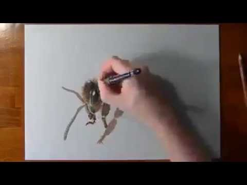 Un Incroyable Dessin D Abeille En Direct Bee Draw