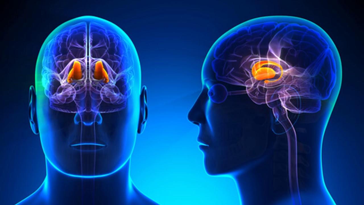 14 FISIOLOGIA cerebro y medula espinal video - YouTube