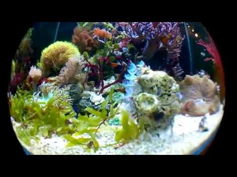 Marine Planted Tank - Fish Eye